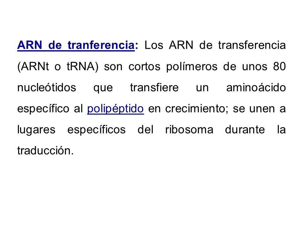 ARN de tranferencia: Los ARN de transferencia (ARNt o tRNA) son cortos polímeros de unos 80 nucleótidos que transfiere un aminoácido específico al pol