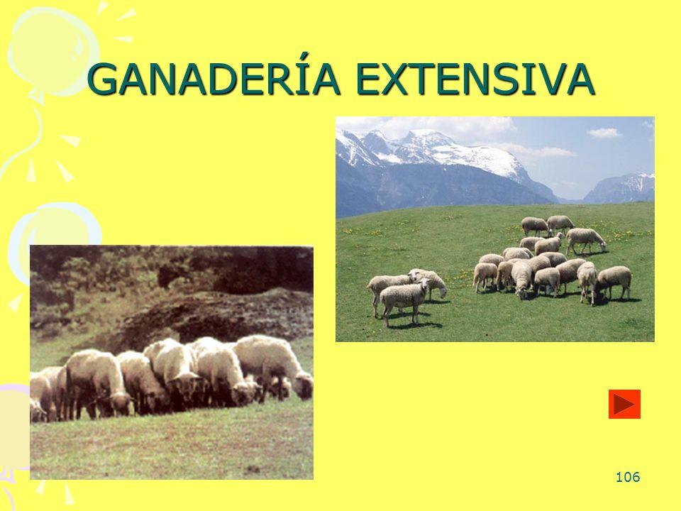 106 GANADERÍA EXTENSIVA