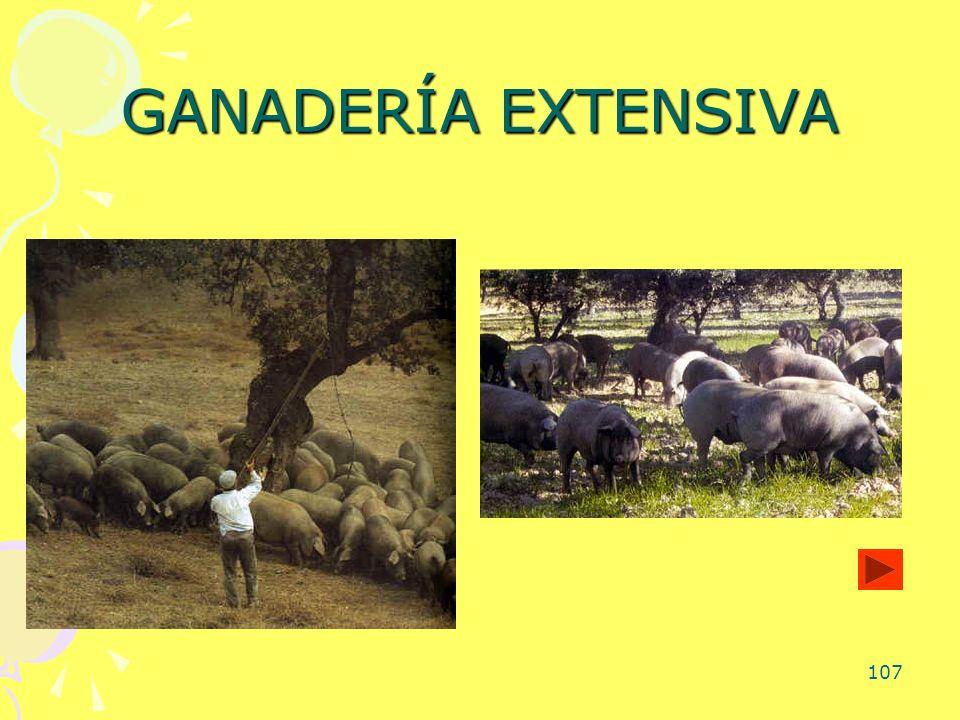 107 GANADERÍA EXTENSIVA