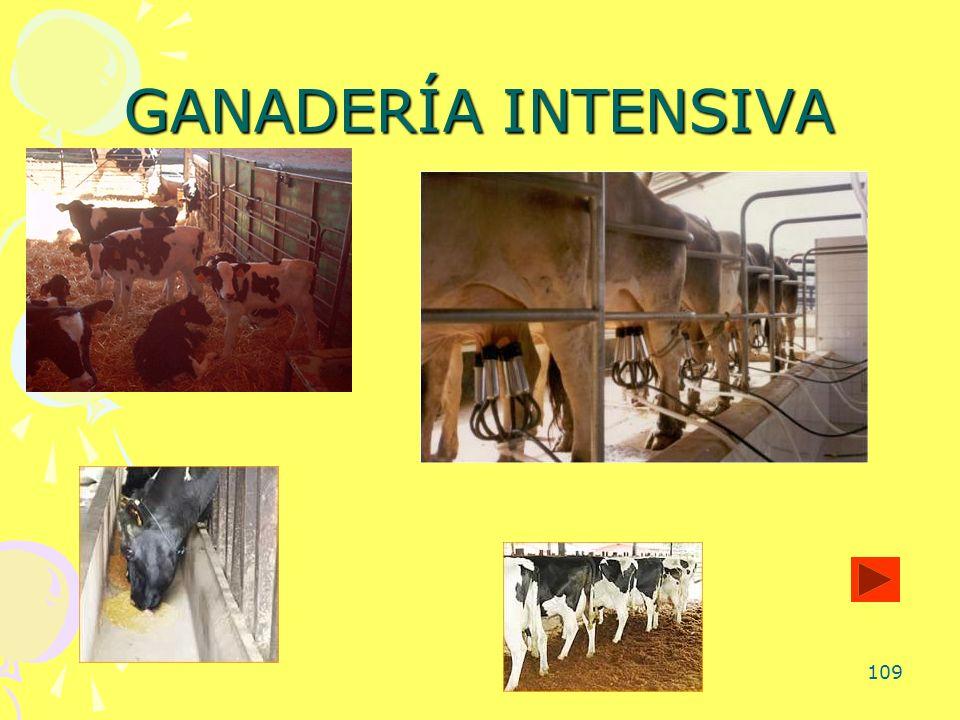 109 GANADERÍA INTENSIVA