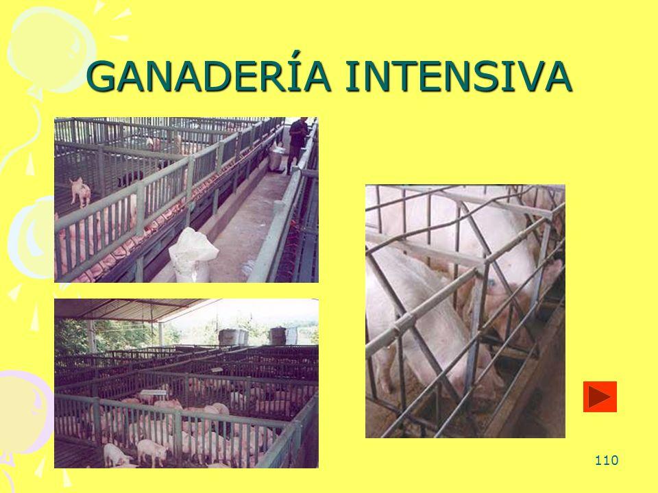 110 GANADERÍA INTENSIVA