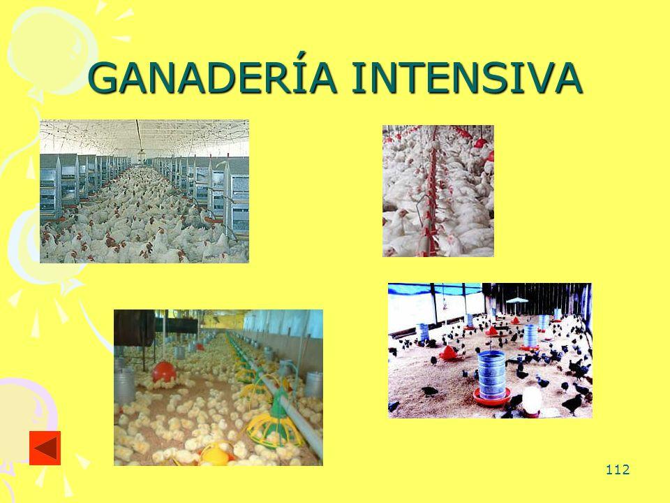 112 GANADERÍA INTENSIVA