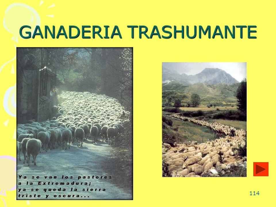 114 GANADERIA TRASHUMANTE