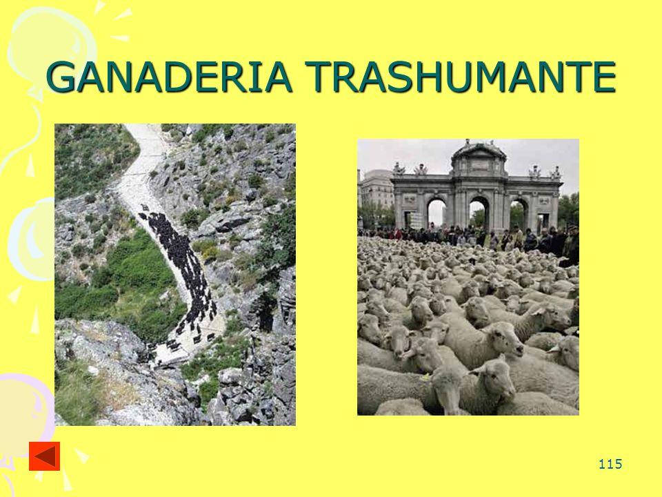 115 GANADERIA TRASHUMANTE