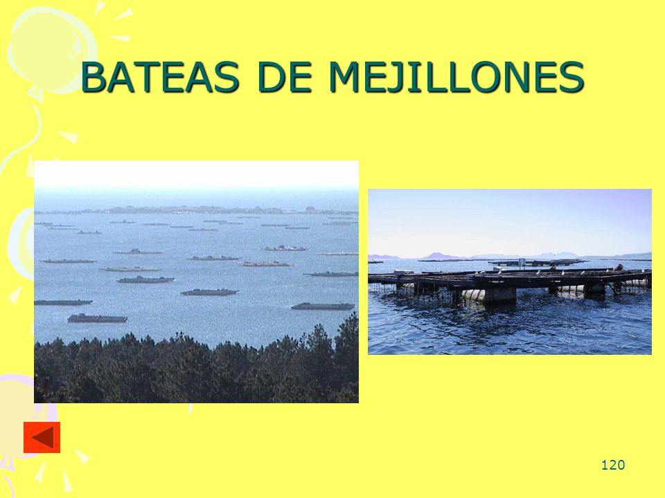120 BATEAS DE MEJILLONES
