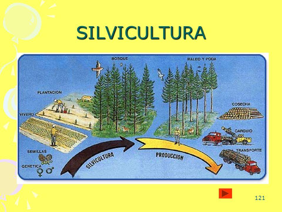 121 SILVICULTURA