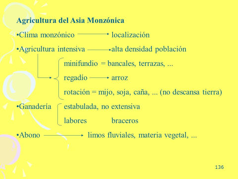 136 Agricultura del Asia Monzónica Clima monzónicolocalización Agricultura intensivaalta densidad población minifundio = bancales, terrazas,... regadí