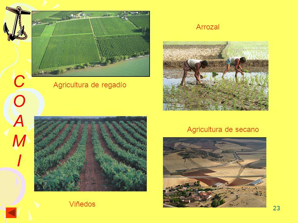 23 COAMICOAMI Agricultura de regadío Arrozal Agricultura de secano Viñedos
