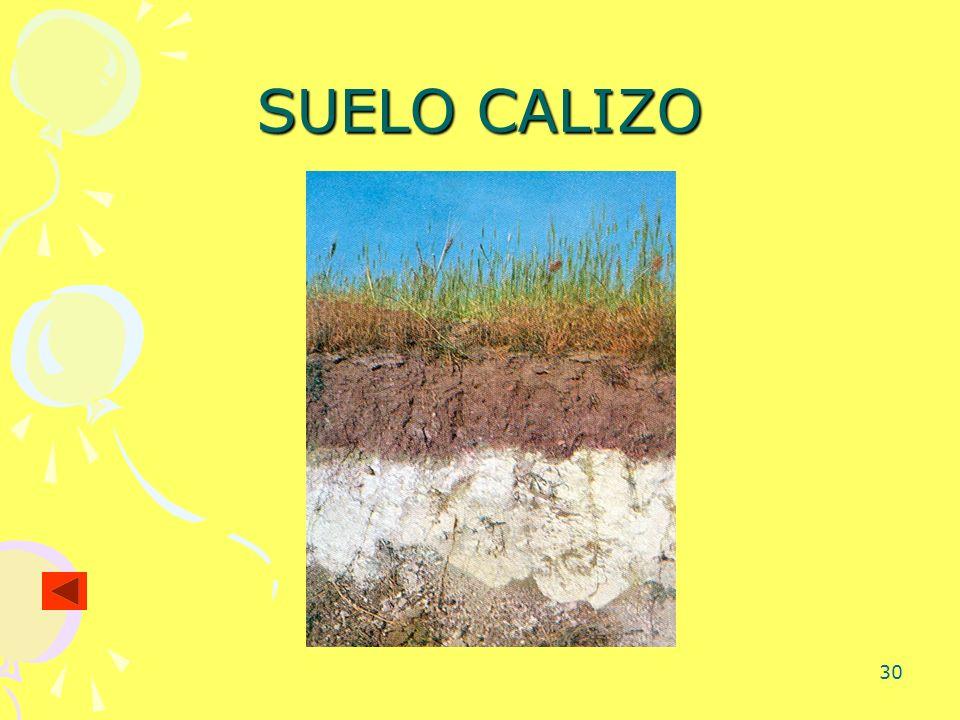 30 SUELO CALIZO