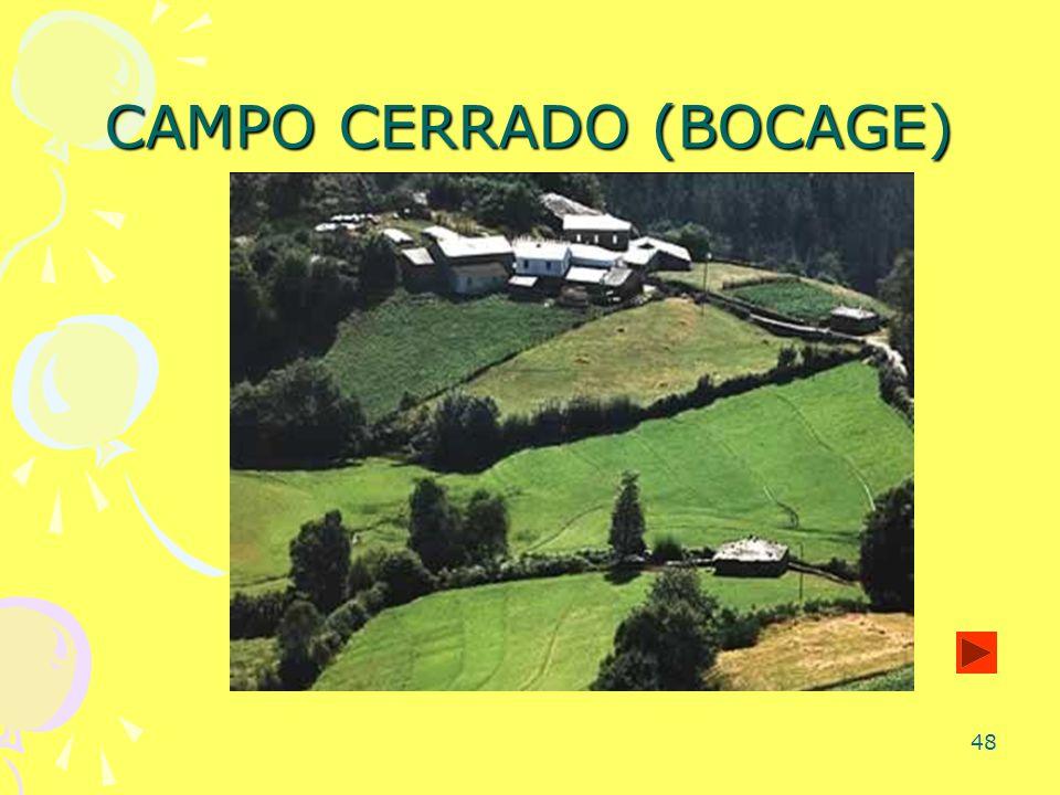 48 CAMPO CERRADO (BOCAGE)