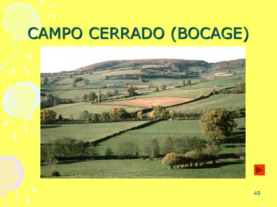 49 CAMPO CERRADO (BOCAGE)
