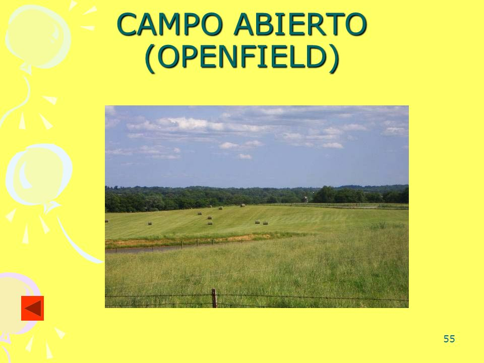 55 CAMPO ABIERTO (OPENFIELD)