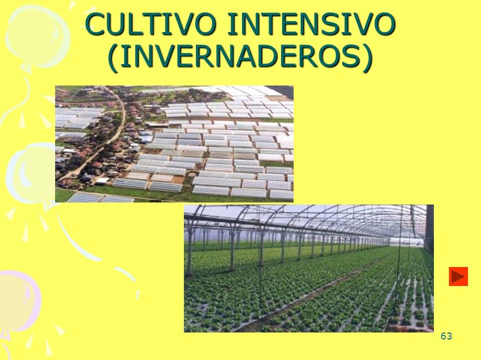 63 CULTIVO INTENSIVO (INVERNADEROS)