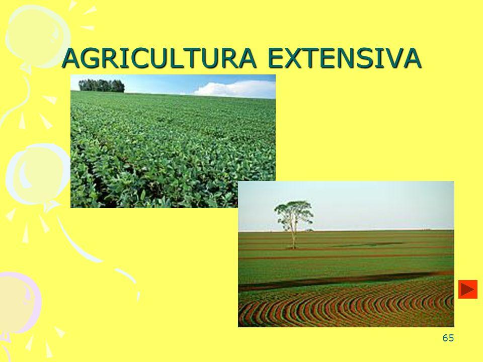 65 AGRICULTURA EXTENSIVA