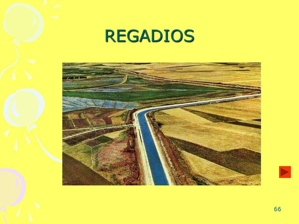 66 REGADIOS