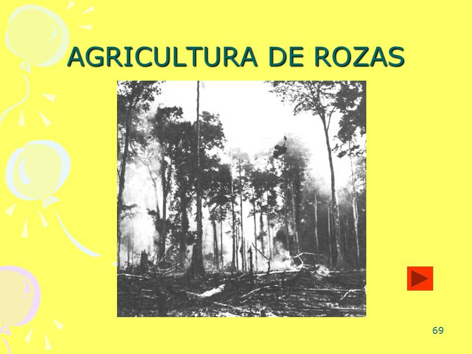 69 AGRICULTURA DE ROZAS