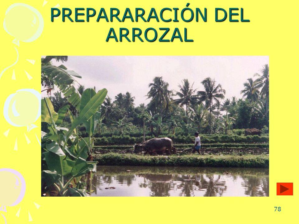 78 PREPARARACIÓN DEL ARROZAL