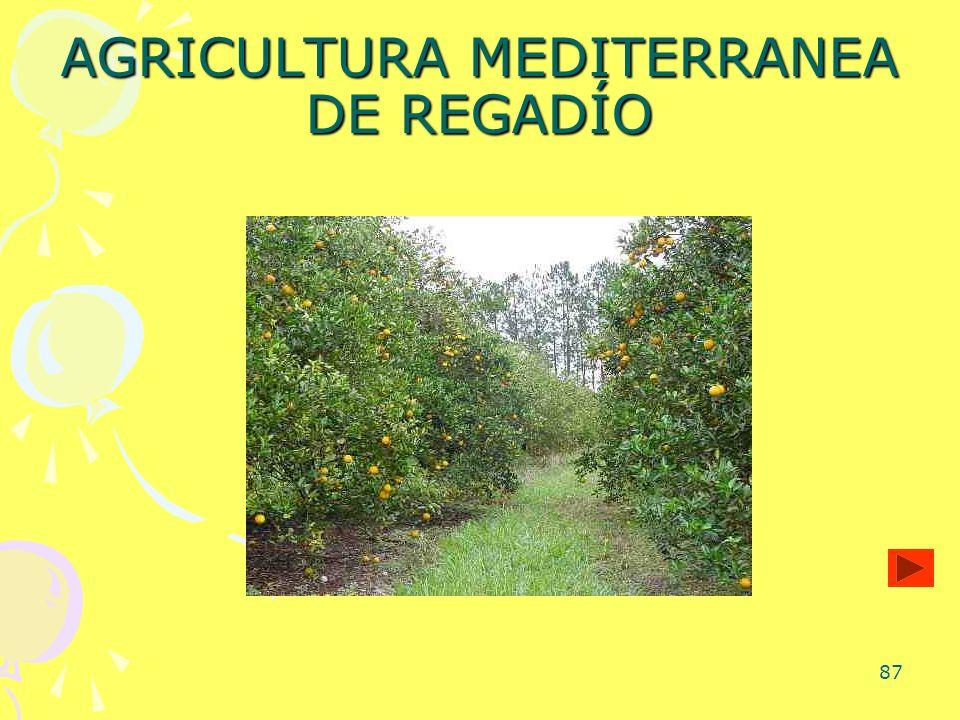 87 AGRICULTURA MEDITERRANEA DE REGADÍO