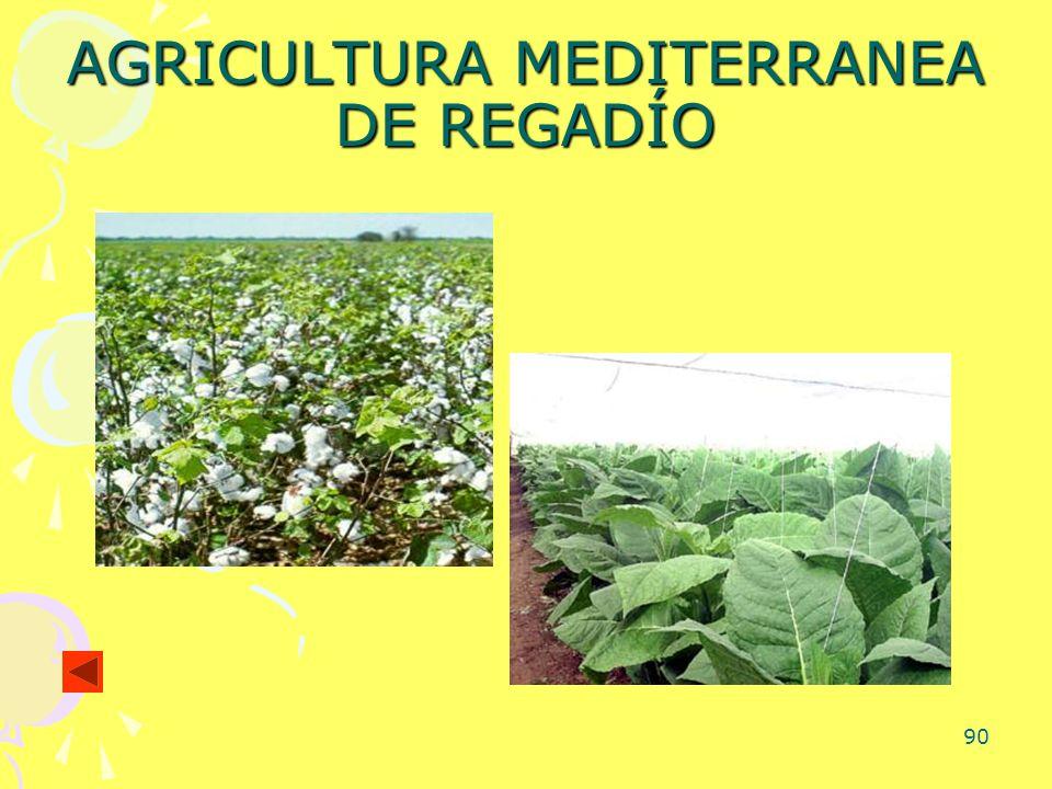 90 AGRICULTURA MEDITERRANEA DE REGADÍO