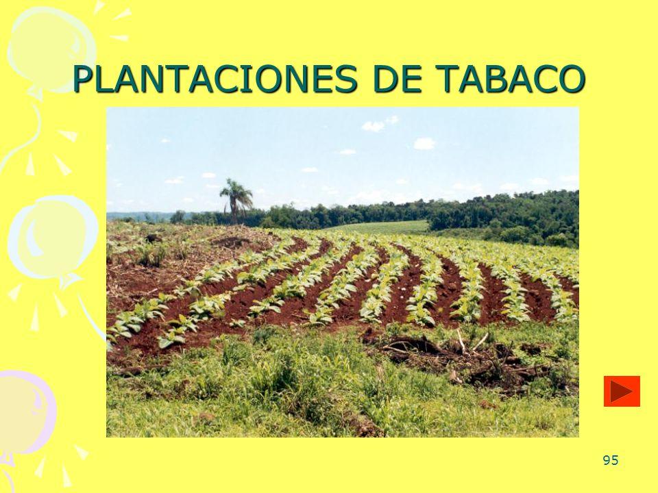 95 PLANTACIONES DE TABACO