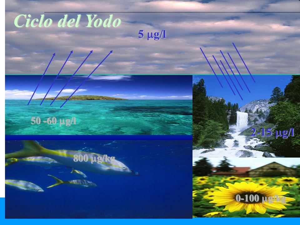 800 g/kg 5 g/l 50 -60 g/l 2-15 g/l 0-100 g/kg Ciclo del Yodo