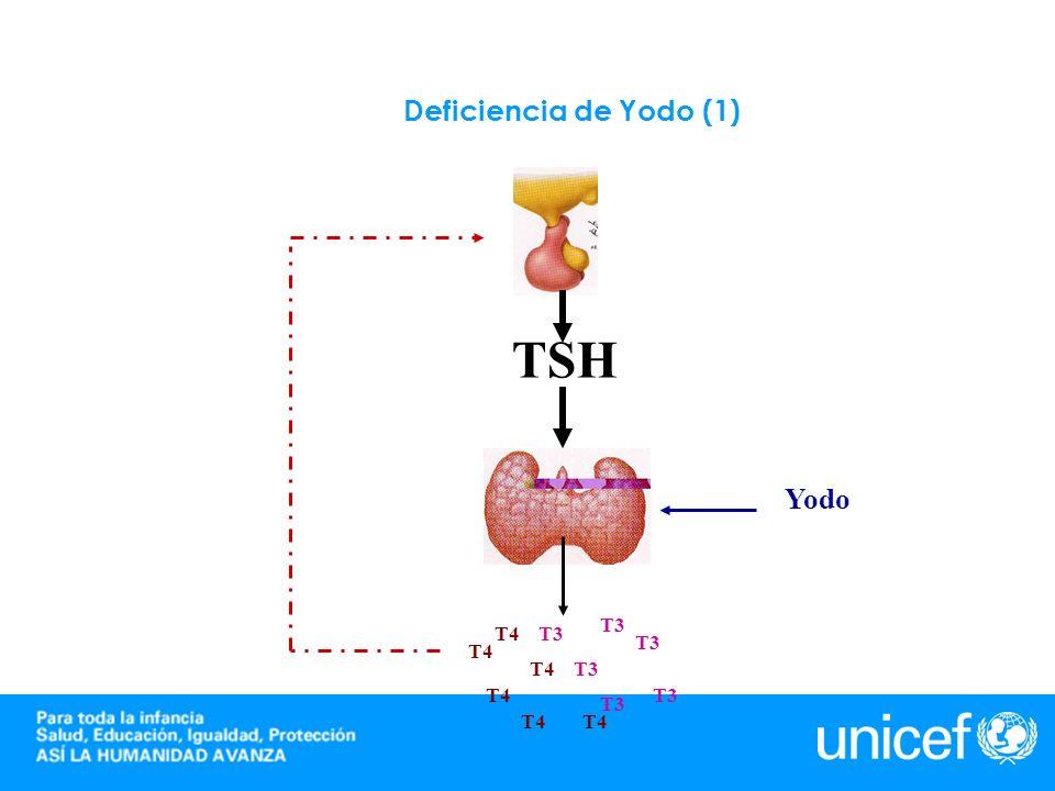 Deficiencia de Yodo (2) T3T4 T3 T4 T3T4 T3 T4 T3T4 T3 T4 TSH Yodo