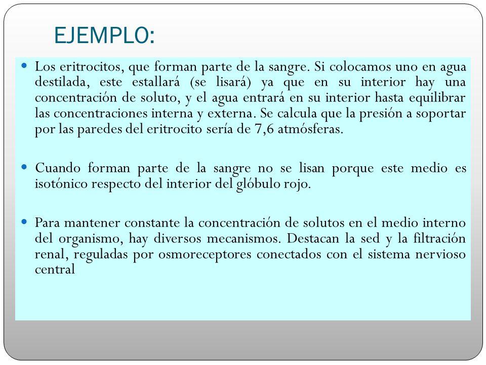 EJEMPLO: Los eritrocitos, que forman parte de la sangre. Si colocamos uno en agua destilada, este estallará (se lisará) ya que en su interior hay una