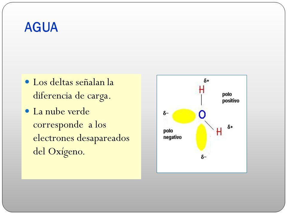AGUA Los deltas señalan la diferencia de carga. La nube verde corresponde a los electrones desapareados del Oxígeno.