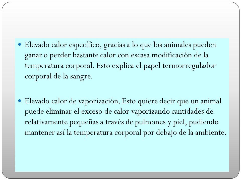 Elevado calor específico, gracias a lo que los animales pueden ganar o perder bastante calor con escasa modificación de la temperatura corporal. Esto