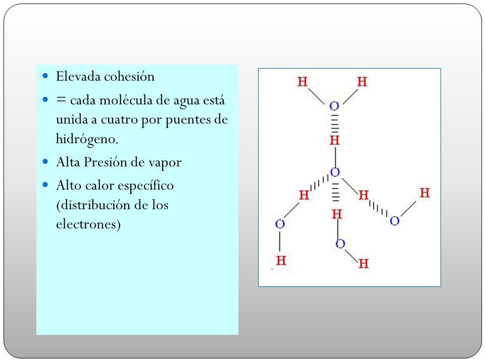 Elevada cohesión = cada molécula de agua está unida a cuatro por puentes de hidrógeno. Alta Presión de vapor Alto calor específico (distribución de lo