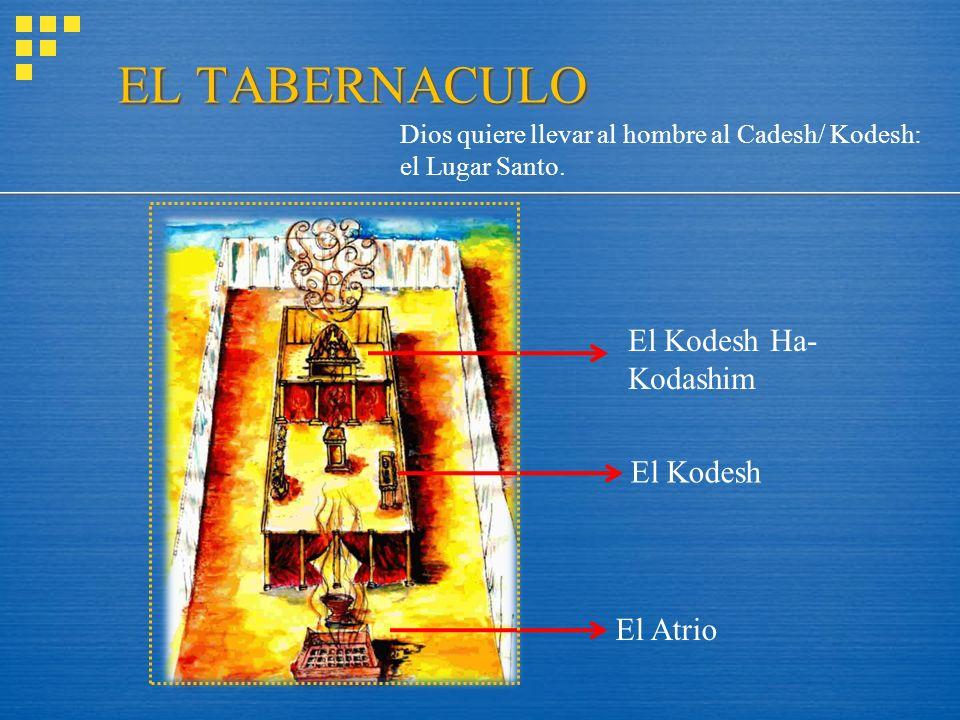 EL TABERNACULO El Kodesh El Kodesh Ha- Kodashim El Atrio Dios quiere llevar al hombre al Cadesh/ Kodesh: el Lugar Santo.