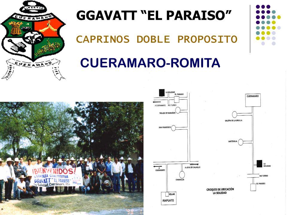 GGAVATT EL PARAISO CUERAMARO-ROMITA CAPRINOS DOBLE PROPOSITO