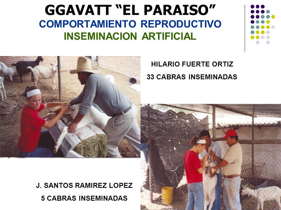 GGAVATT EL PARAISO COMPORTAMIENTO REPRODUCTIVO INSEMINACION ARTIFICIAL HILARIO FUERTE ORTIZ 33 CABRAS INSEMINADAS J. SANTOS RAMIREZ LOPEZ 5 CABRAS INS