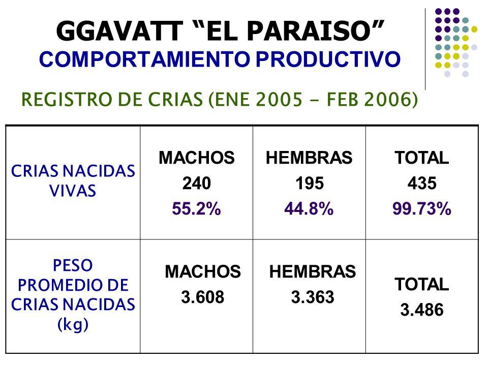 GGAVATT EL PARAISO COMPORTAMIENTO PRODUCTIVO REGISTRO DE CRIAS (ENE 2005 - FEB 2006) CRIAS NACIDAS VIVAS MACHOS 240 55.2% HEMBRAS 195 44.8% TOTAL 435