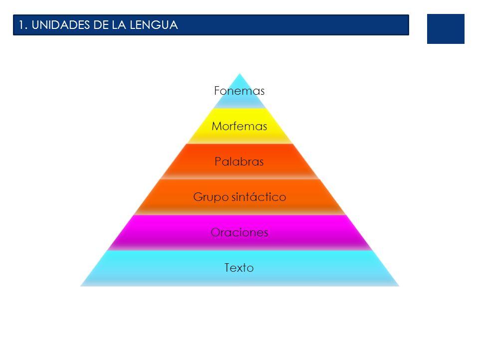 2.PARTES DE LA GRAMÁTICA Se ocupa del estudio de los fonemas.