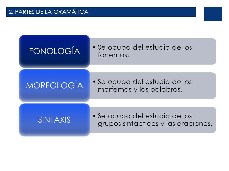 2. PARTES DE LA GRAMÁTICA Se ocupa del estudio de los fonemas. FONOLOGÍA Se ocupa del estudio de los morfemas y las palabras. MORFOLOGÍA Se ocupa del