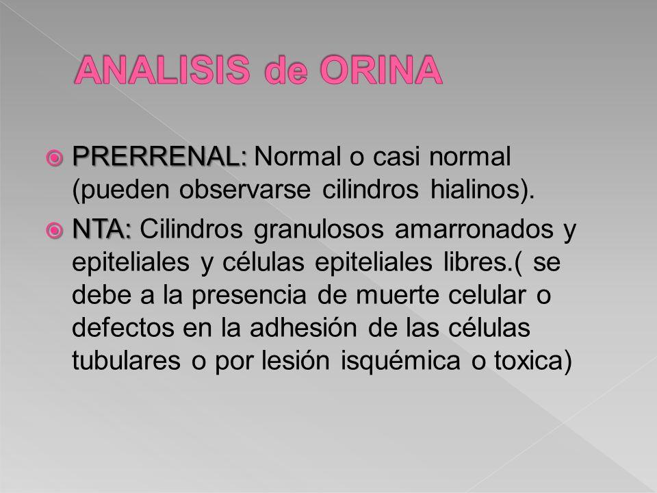PRERRENAL: PRERRENAL: Normal o casi normal (pueden observarse cilindros hialinos). NTA: NTA: Cilindros granulosos amarronados y epiteliales y células