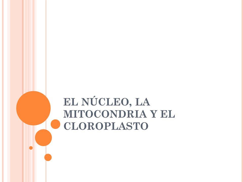 EL NÚCLEO, LA MITOCONDRIA Y EL CLOROPLASTO