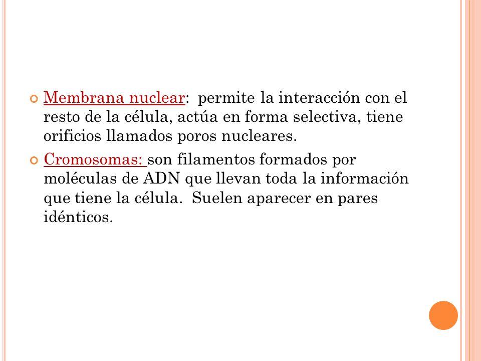 Membrana nuclear: permite la interacción con el resto de la célula, actúa en forma selectiva, tiene orificios llamados poros nucleares. Cromosomas: so