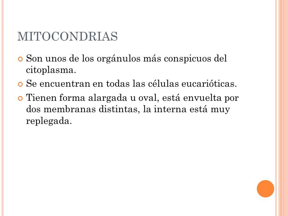 M ITOCONDRIA