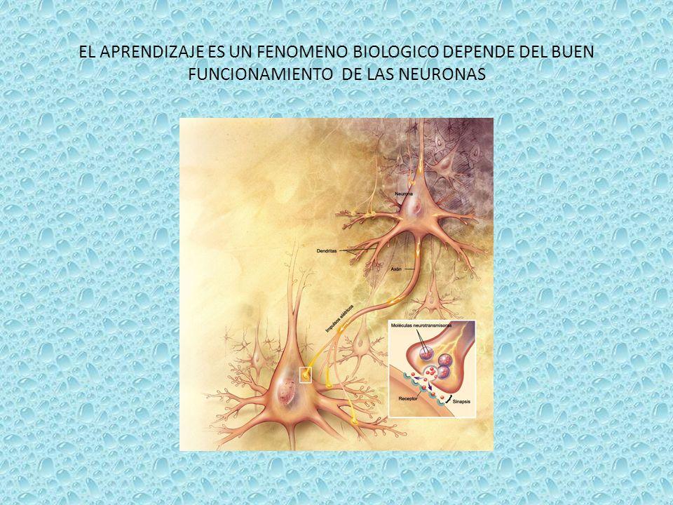 CATEGORIA C.I. LIMITROFE 68 – 83 LEVE 52 – 67 MODERADO 36 – 51 SEVERO 20 – 35 PROFUNDO < 20