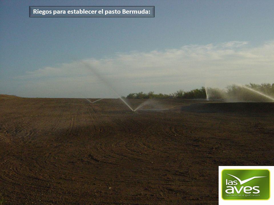 Desde el riego inicial para poder lograr una excelente germinación de la semilla hasta el establecimiento del pasto.