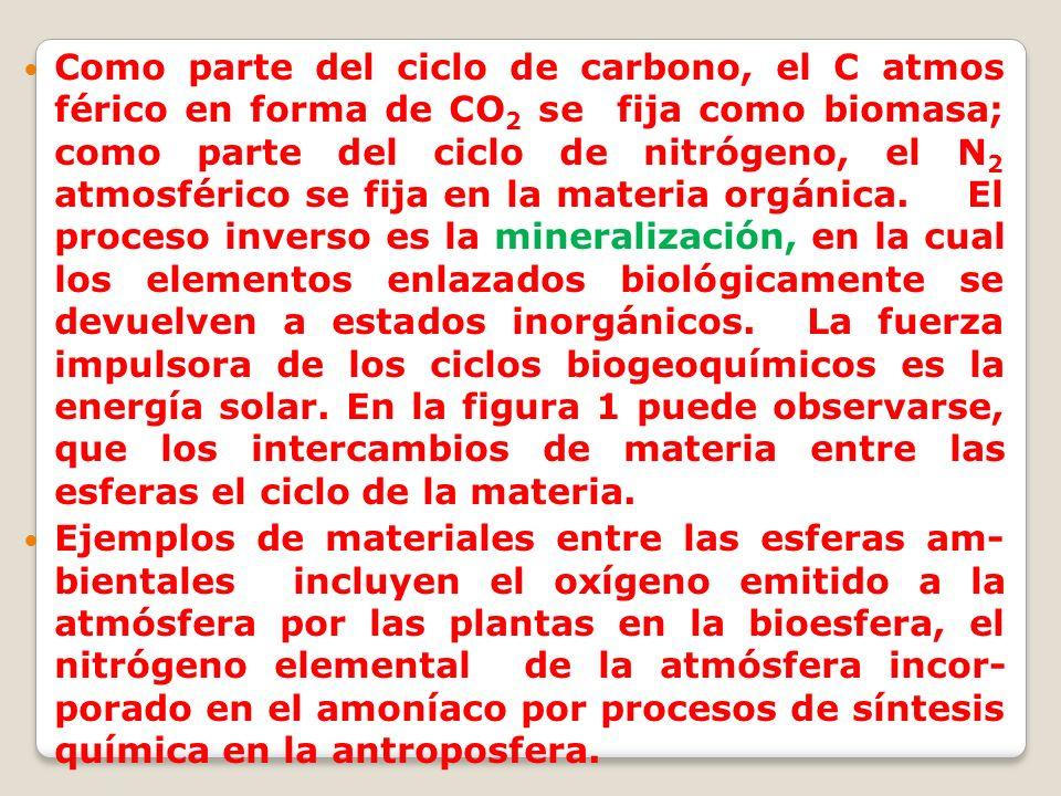Como parte del ciclo de carbono, el C atmos férico en forma de CO 2 se fija como biomasa; como parte del ciclo de nitrógeno, el N 2 atmosférico se fij
