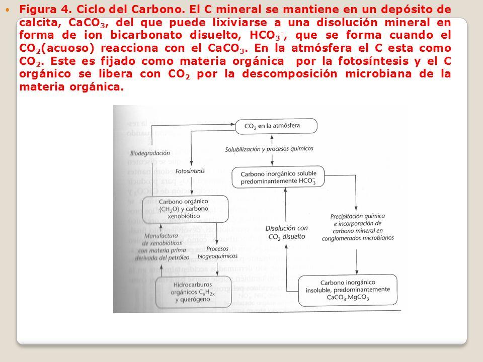 Figura 4. Ciclo del Carbono. El C mineral se mantiene en un depósito de calcita, CaCO 3, del que puede lixiviarse a una disolución mineral en forma de