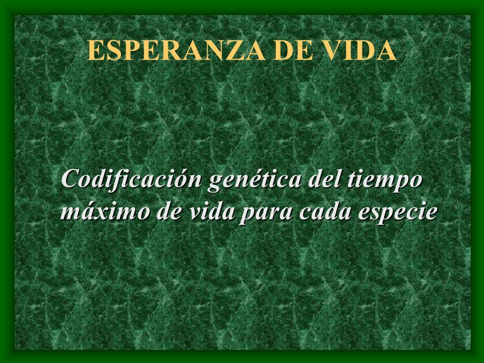 ESPERANZA DE VIDA Codificación genética del tiempo máximo de vida para cada especie