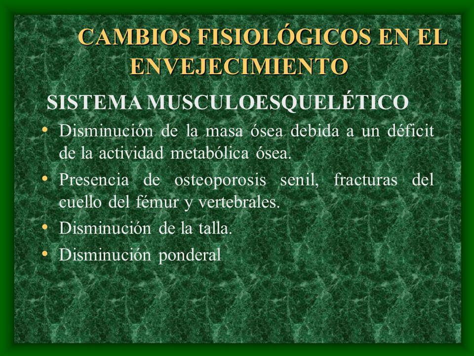 CAMBIOS FISIOLÓGICOS EN EL ENVEJECIMIENTO SISTEMA MUSCULOESQUELÉTICO Disminución de la masa ósea debida a un déficit de la actividad metabólica ósea.