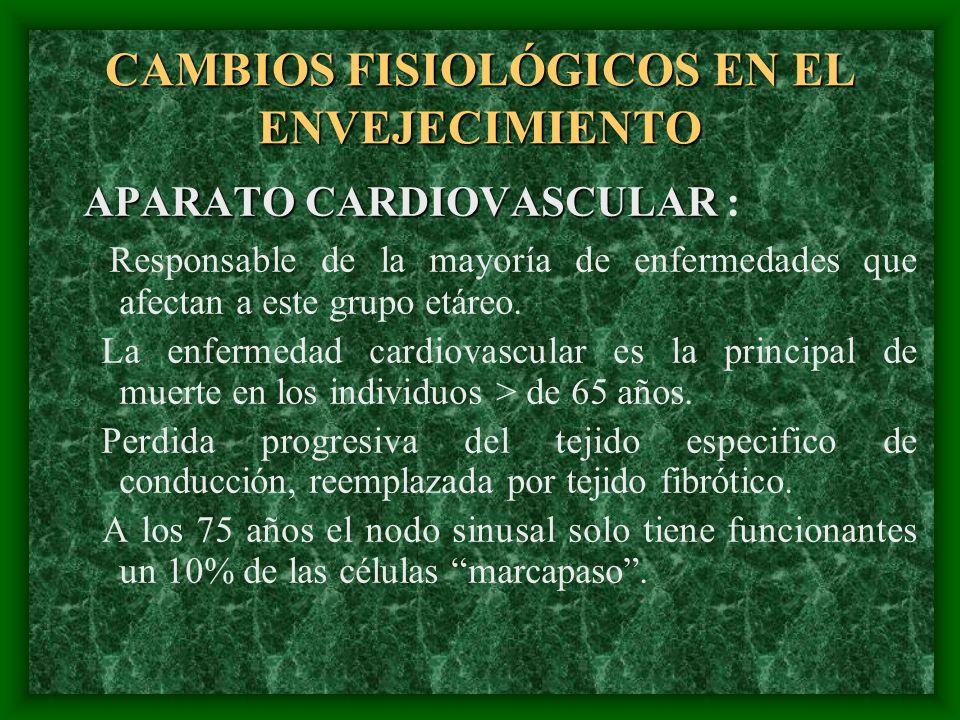 CAMBIOS FISIOLÓGICOS EN EL ENVEJECIMIENTO APARATO CARDIOVASCULAR APARATO CARDIOVASCULAR : Responsable de la mayoría de enfermedades que afectan a este
