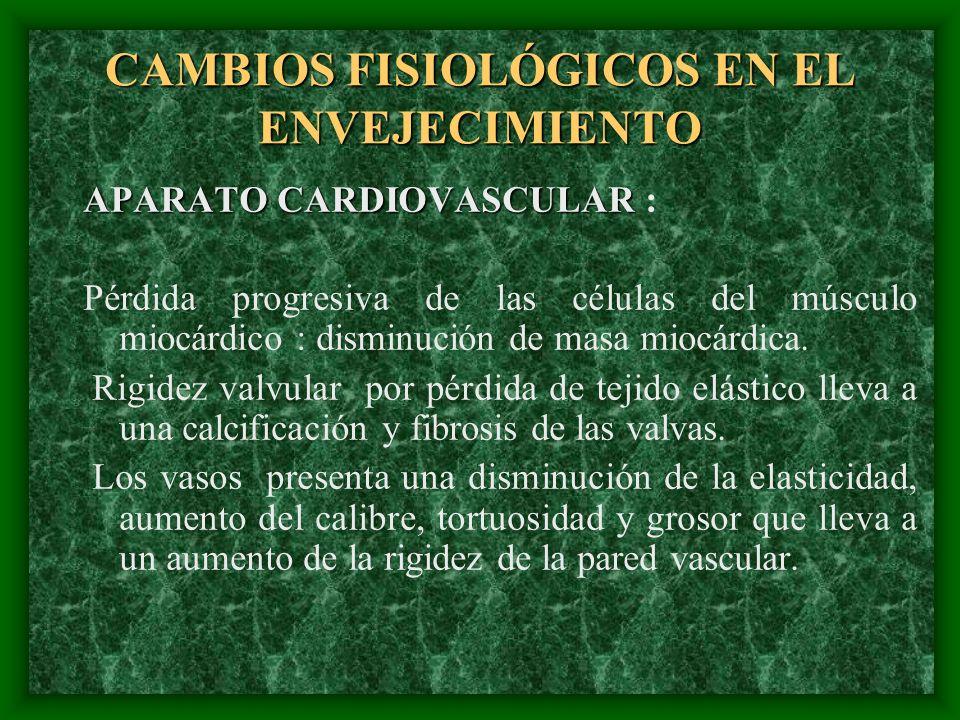 CAMBIOS FISIOLÓGICOS EN EL ENVEJECIMIENTO APARATO CARDIOVASCULAR APARATO CARDIOVASCULAR : Pérdida progresiva de las células del músculo miocárdico : d