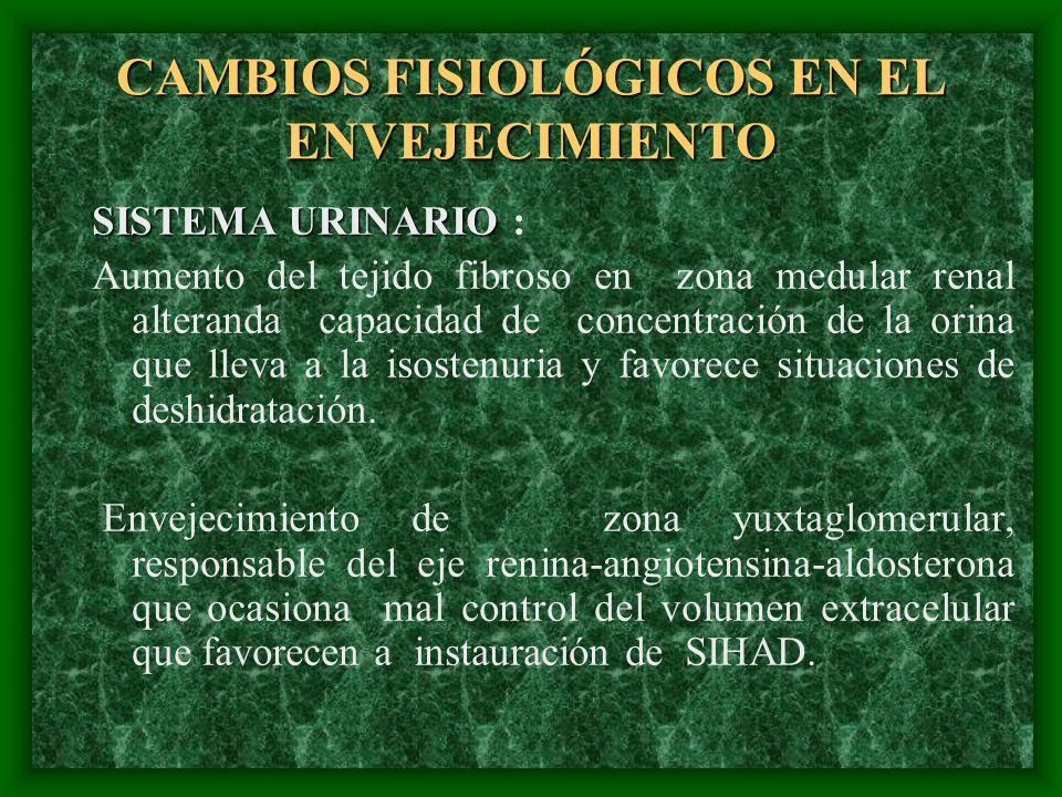 CAMBIOS FISIOLÓGICOS EN EL ENVEJECIMIENTO SISTEMA URINARIO SISTEMA URINARIO : Aumento del tejido fibroso en zona medular renal alteranda capacidad de