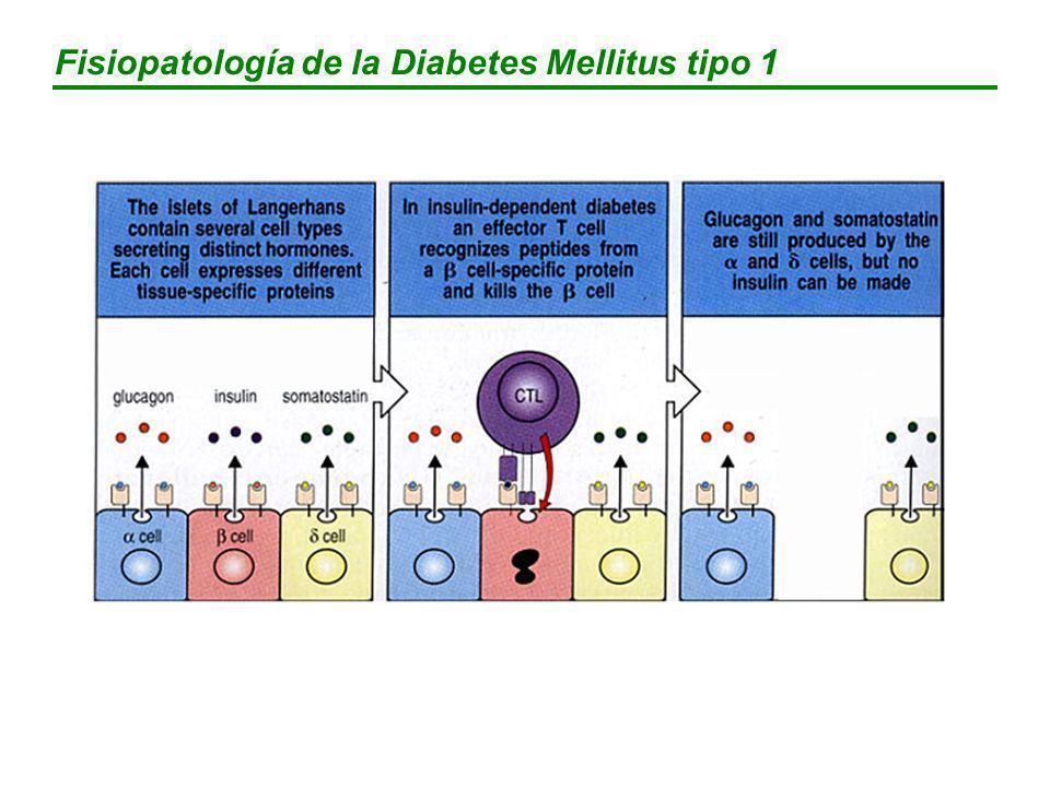 BIGUANIDAS Dosis inicial (mg/día)Dosis máxima (mg/día) METFORMINA8503000 MECANISMO ACCION y EFECTOS FARMACOLOGICOS Antihiperglucemiante (reduce hiperglucemia basal y posprandrial) Disminuye la gluconeogénesis hepática Mejora la captación de glucosa por tejidos periféricos No afecta la secreción pancreática No causa hipoglucemia Mejora el perfil lipídico Disminuye el apetito y el peso corporal